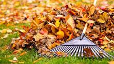 Yard & Leaf Cleanup